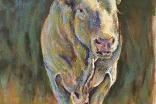 bull-19B323DD8-39D6-67FD-E5DE-E4A99797723D.jpg