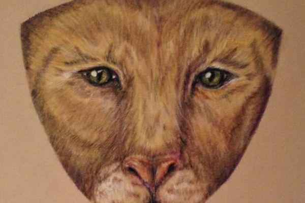 clove-cougar-eyes-1920px-72dpi5320C07C-26F6-7C5D-FF02-E6FCB6E0DA86.jpg