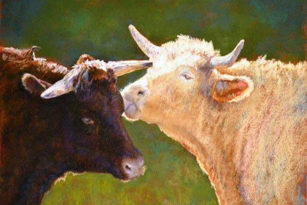 love-catherine-french-cows-no-bullE808C884-6596-E939-F167-4290ADBCB818.jpg