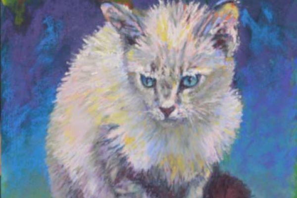 wet-kitty29A16E8F-D4CA-FC70-B820-2FDDD1265BCE.jpg